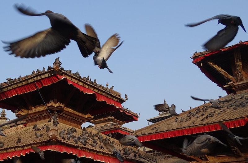 Голуби в Катманду