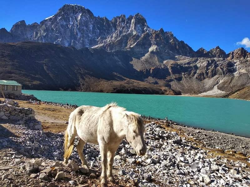 Лошадь на озере Непал